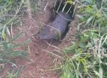 Cách bẫy chuột đồng tuyệt vời từ những thợ săn chuột
