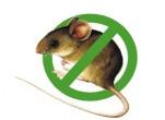 Cách bẫy chuột nhắt trong nhà triệt để
