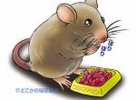 Cách diệt chuột bằng mùi hương dễ tìm