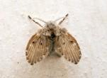 Cách diệt ruồi cánh bướm trong nhà vệ sinh