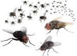 Cách diệt ruồi trong chuồng bò chăn nuôi