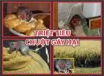 Những cách làm bẫy diệt chuột tại nhà dễ dàng