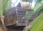 Cách bẫy chuột dừa tuyệt kỹ từ cao thủ Bến Tre
