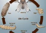 3 cách diệt trừ ruồi giấm hiệu quả