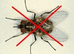 Bạn đã biết cách diệt ruồi cống tốt nhất?