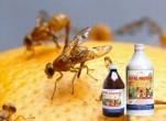 Cách diệt ruồi đục quả có hiệu quả tốt