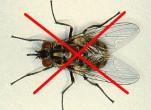 Cách diệt ruồi hiệu quả nhất không cần dùng thuốc