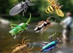 Chỉ cách làm bẫy diệt ruồi vàng cho nhà nông