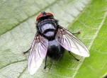 Những cách diệt ruồi hiệu quả tại nhà
