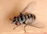 Tổng hợp những cách diệt ruồi dân gian