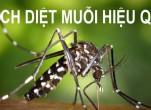 Cách diệt muỗi đơn giản nhất là đâu?