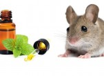Cách đuổi chuột chù ra khỏi nhà