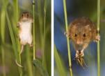 Tất tần tật các biện pháp chuột hại lúa hiệu quả nhất