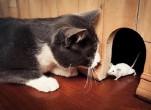 Cách diệt chuột tại nhà hiệu quả