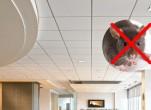 Những cách diệt chuột trên trần nhà hiệu quả
