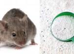 Cách đuổi chuột dân gian đơn giản