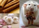 Cách đuổi chuột không dùng thuốc